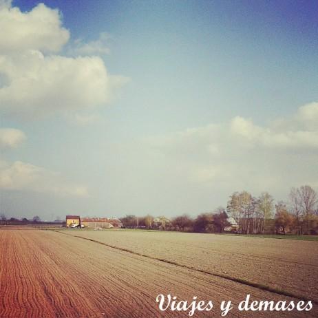 Campo Polonia