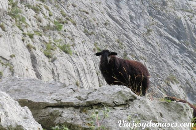 Nos cruzamos con varias ovejas en el camino.