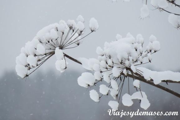 Flores de nieve