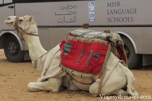 Por todo el sitio ofrecen paseos en camello.